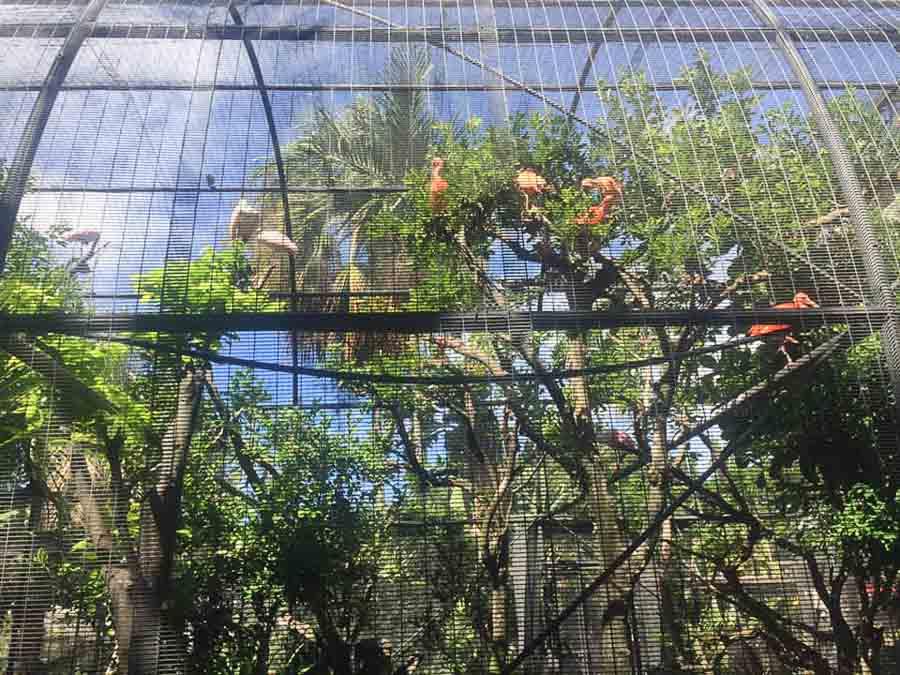 Visit the Honolulu Zoo