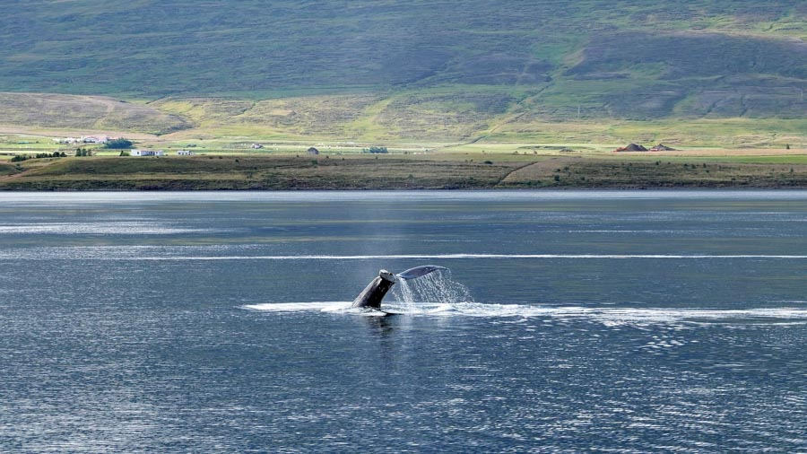 Whale watching show from Waikiki Beach