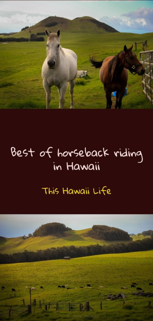 Pinterest horseback riding in Hawaii