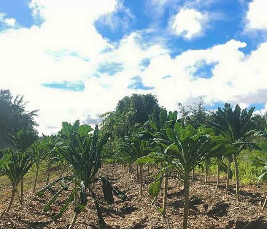 Kahuku-Farms in Oahu