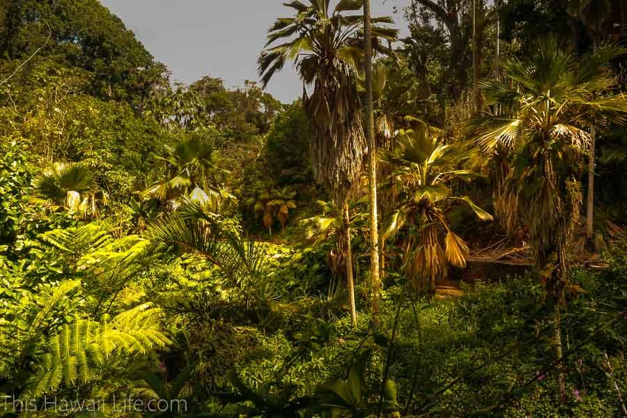 Visit a Botanical Garden in Oahu Hawaii