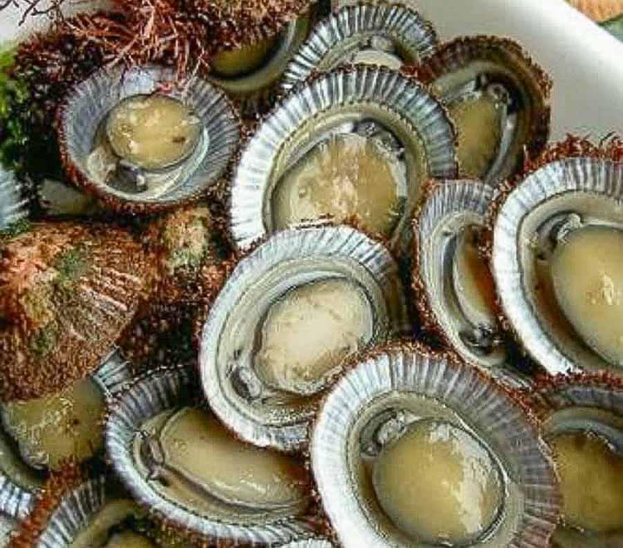 opihi shellfish