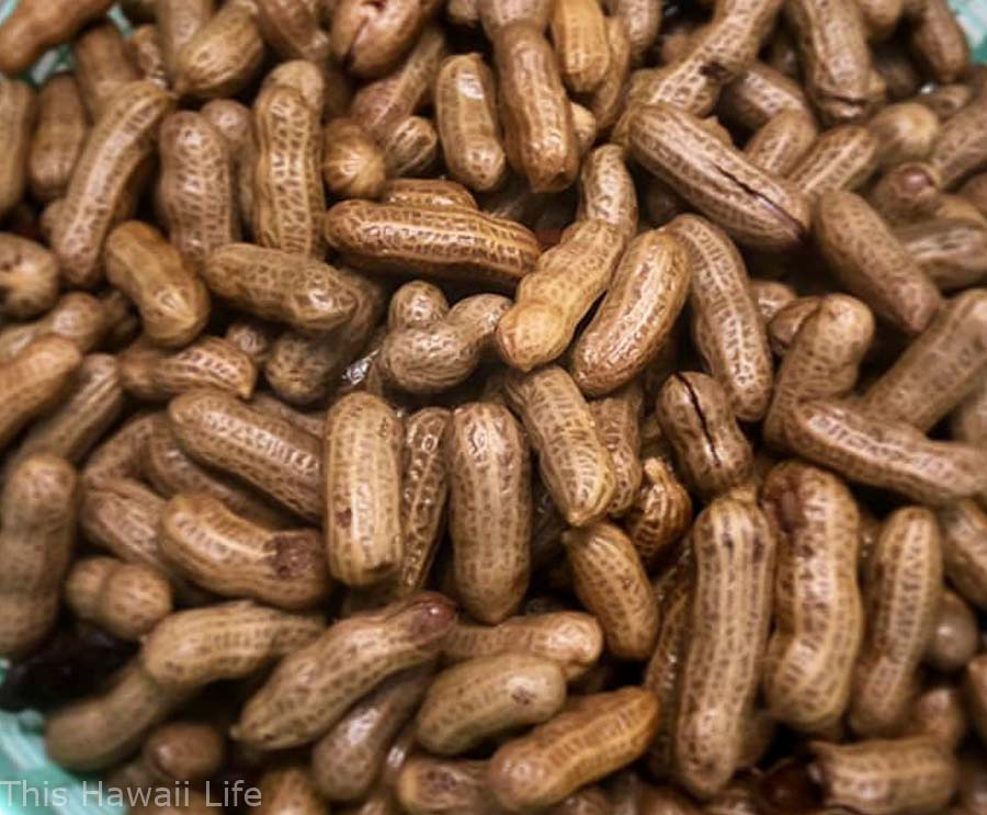 eating Boiled-peanuts in Hawaii