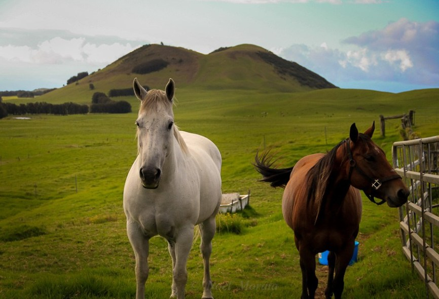 Hawaii-horseback-riding-on the Big Island