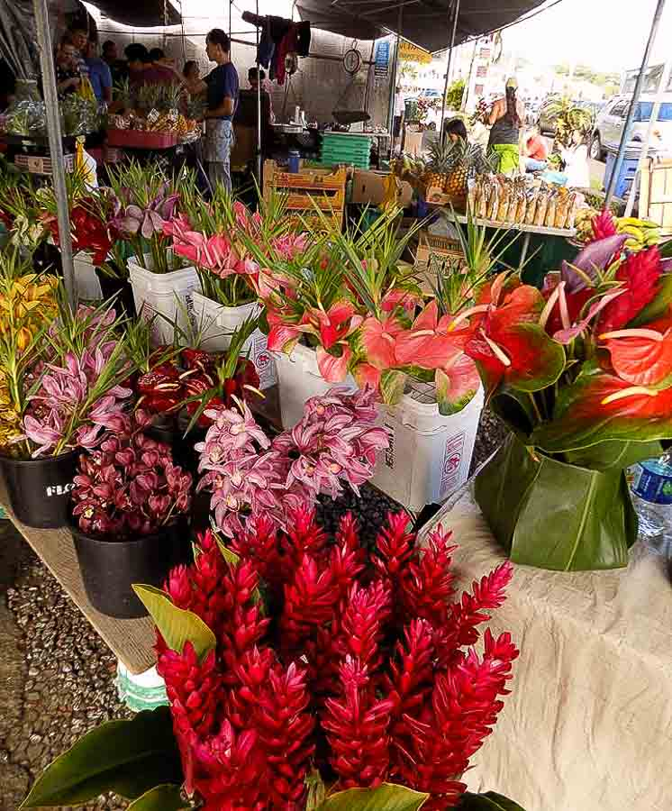 Shopping at the farmers market in Kona