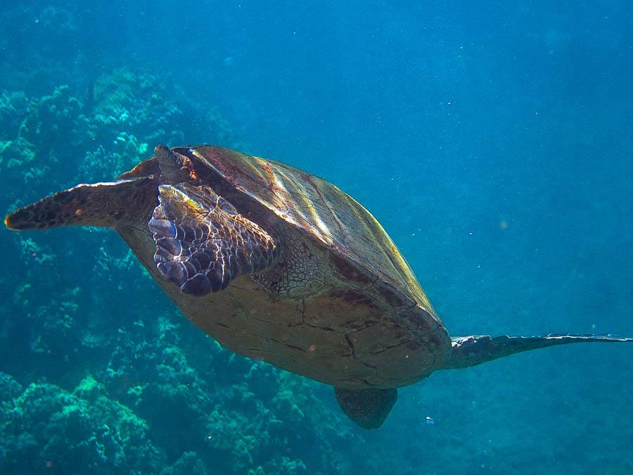 snorkeling fun in Maui