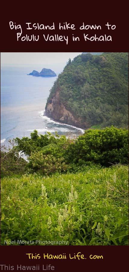 pinterest Big-Island-hike-to-Polulu-Valley