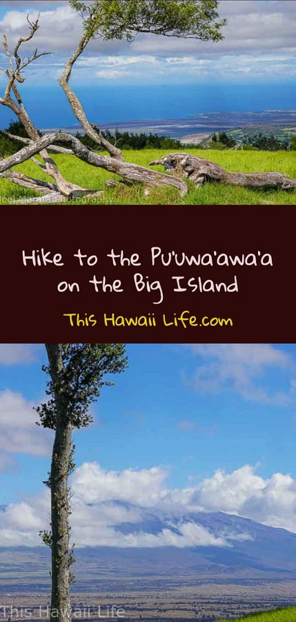 Pinterest https://thishawaiilife.com/big-island-hike-at-puuwaawaa/