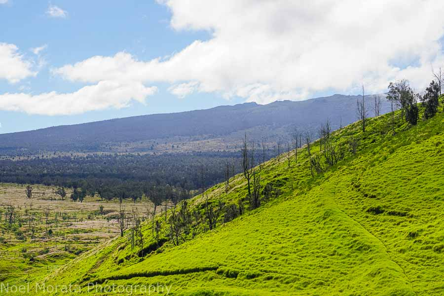 Hiking Pu'uwa'awa'a with Hualalei in background