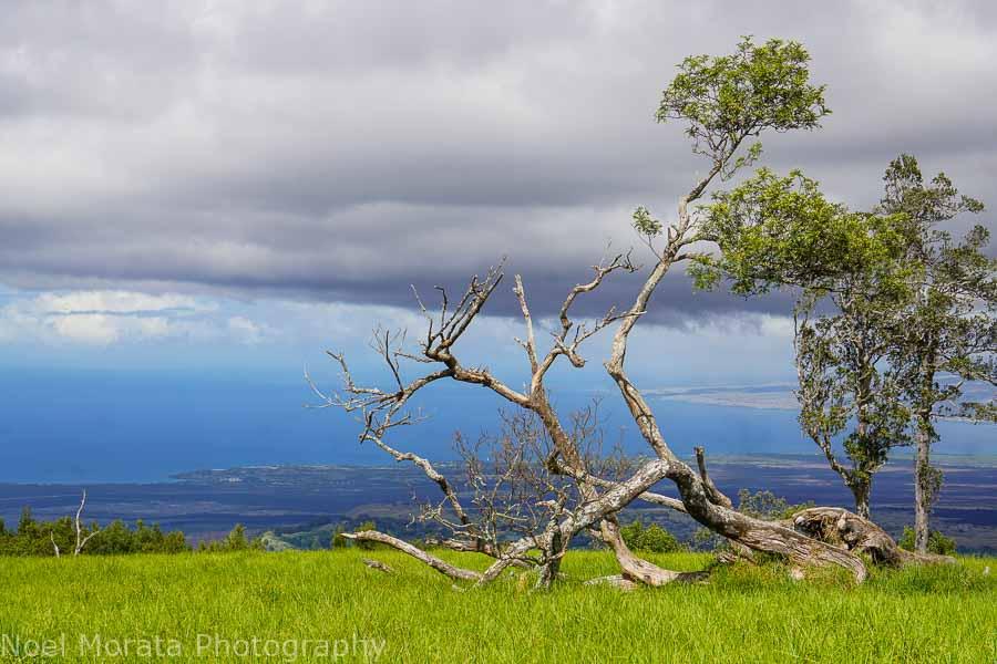 Big Island hike at Pu'uwa'awa'a
