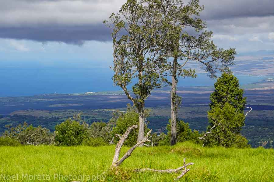 Kohala views from the cinder cone at  Pu'uwa'awa'a