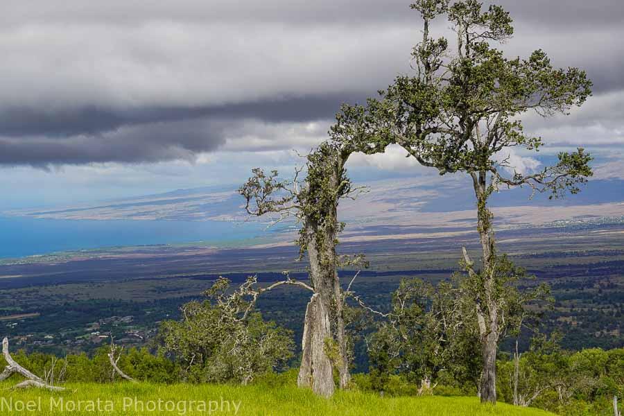 Tree portal and views from Pu'uwa'awa'a