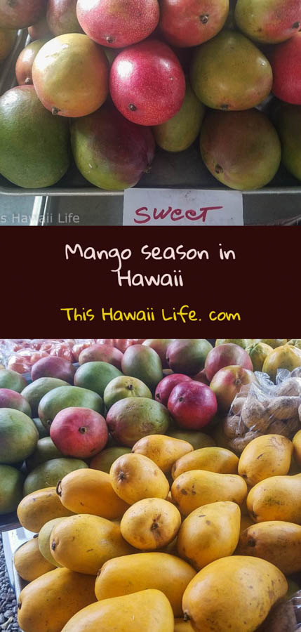 pinterest mango season in Hawaii