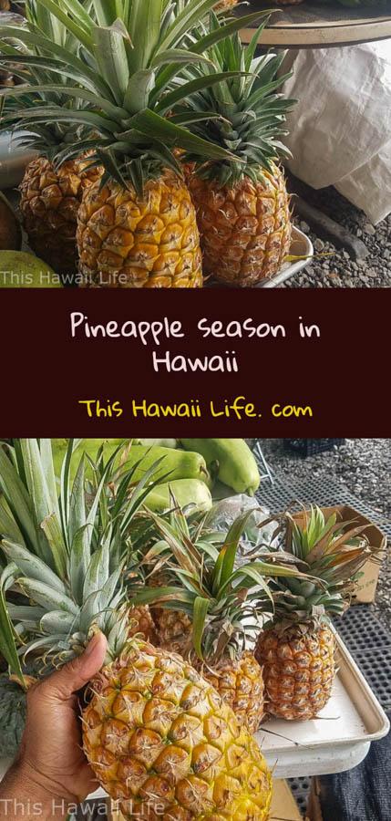 Pinterest pineapple season in Hawaii
