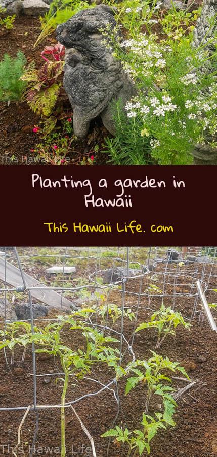 Pinterest planting a garden in Hawaii