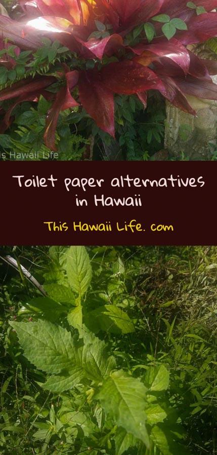 Pinterest Toilet paper alternatives in Hawaii