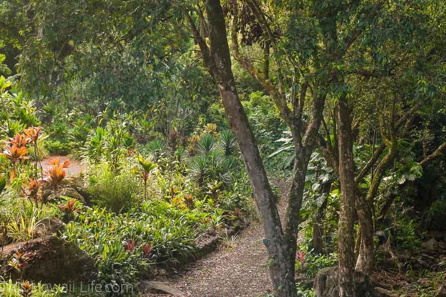 Visiting the botanical garden in Waimea Valley