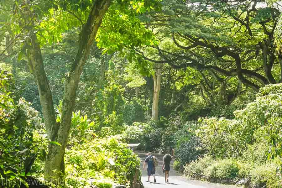 hiking through Waimea valley and botanical garden
