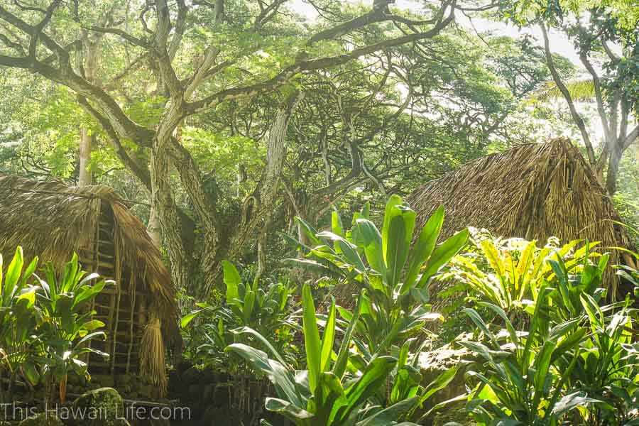 Docent tours offered at Waimea Valley botanical gardens