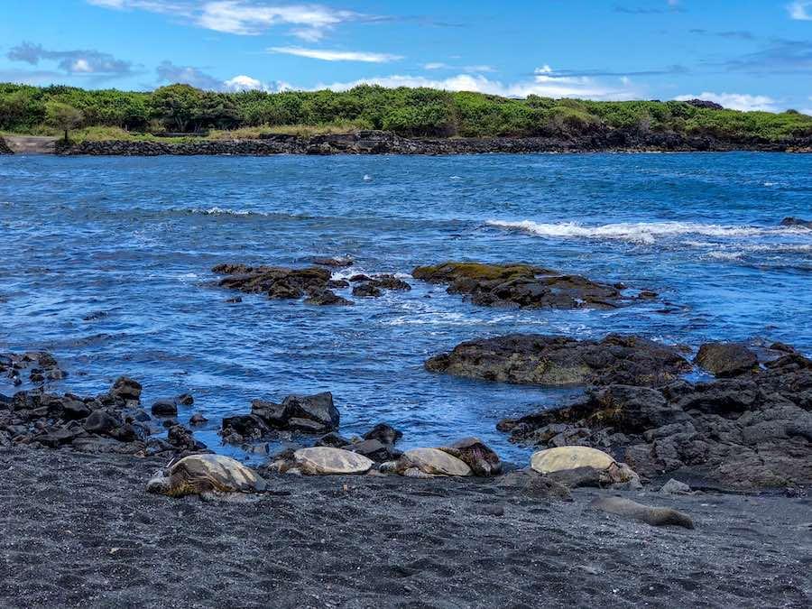 Punalu'u Beach on the Big Island