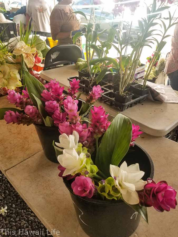 Tropical flowers for sale at a farmers market