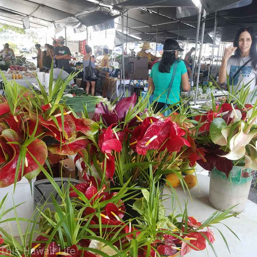 Tropical flowers for sale at the HIlo Farmers market