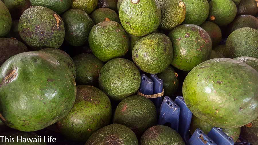 Avocado season in Hawaii
