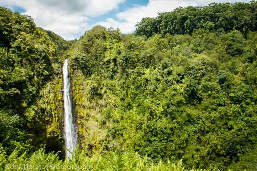 Visiting Akaka Falls on the Big Island tour