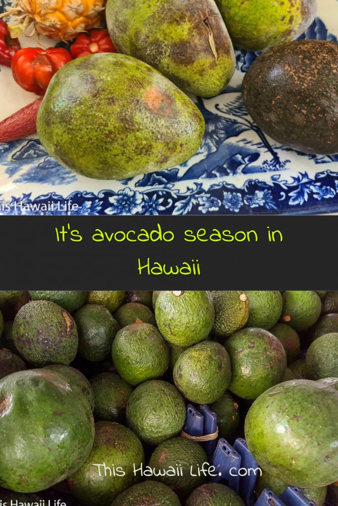 Pinterest pin for Avocado season in Hawaii