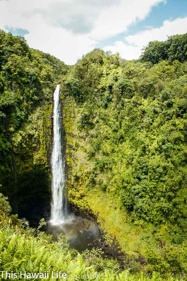 Akaka Falls in Honomu