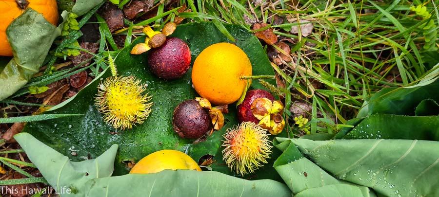 Fruit Offerings of Ho'o kupu to Pele at volcanoes national park