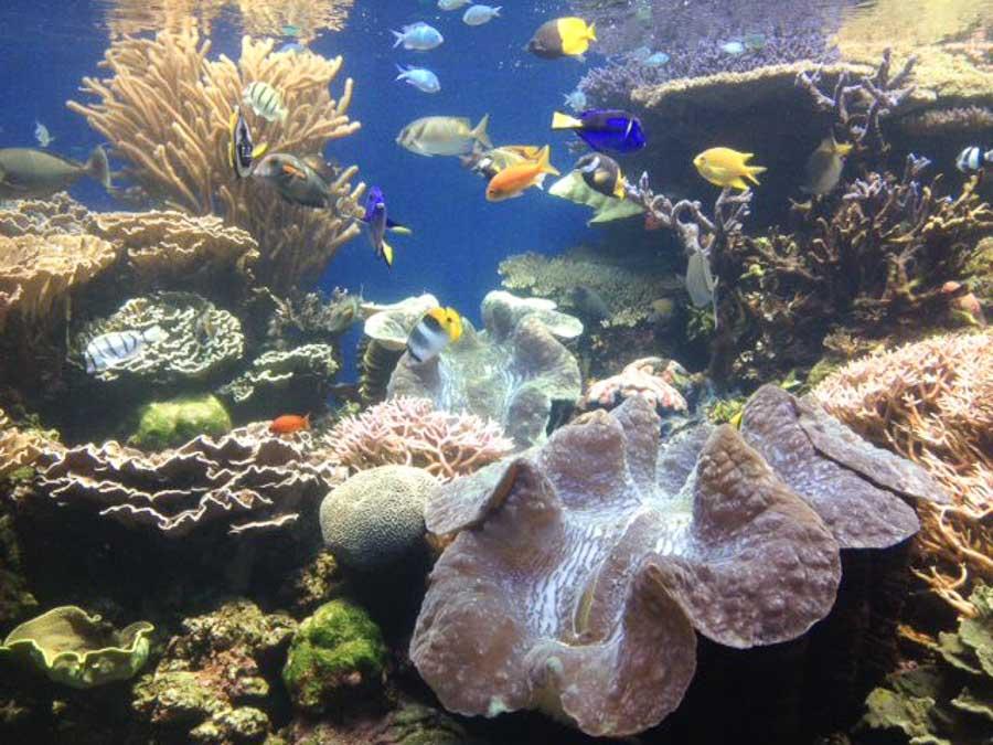 Top things to do in Waikiki like the Waikiki Aquarium