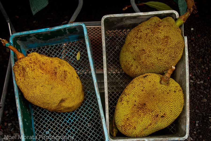 Jackfruit from Hawaii