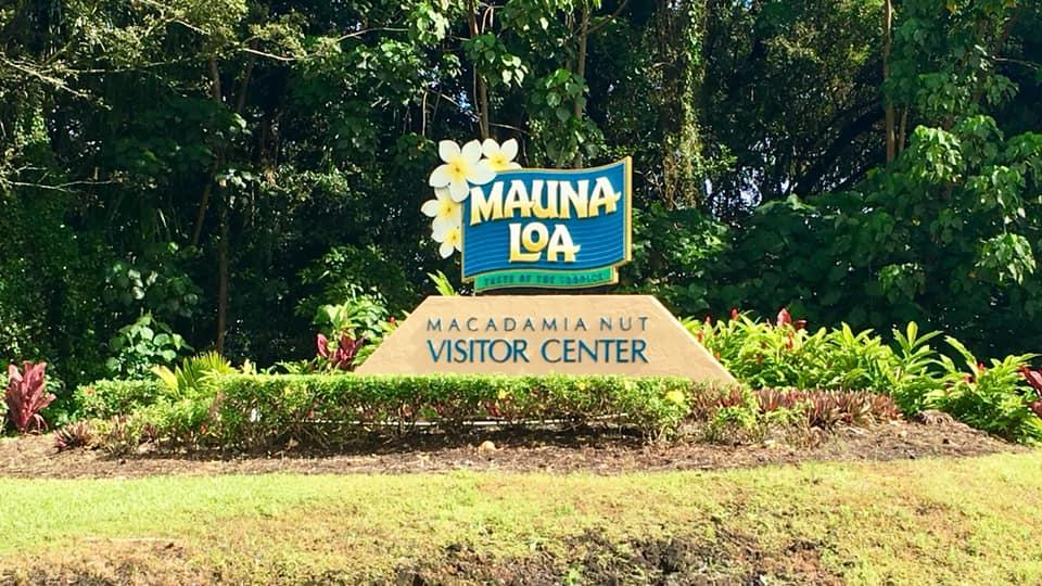 Visiting Mauna Loa Macadamia Farms