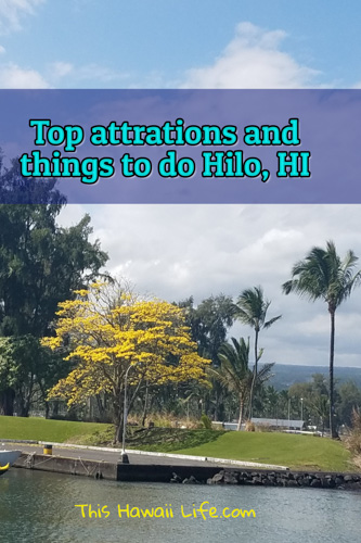 Top things to do in Hilo now