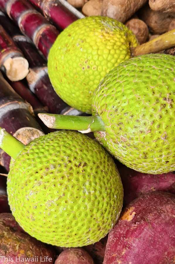 Uses for eating Breadfruit