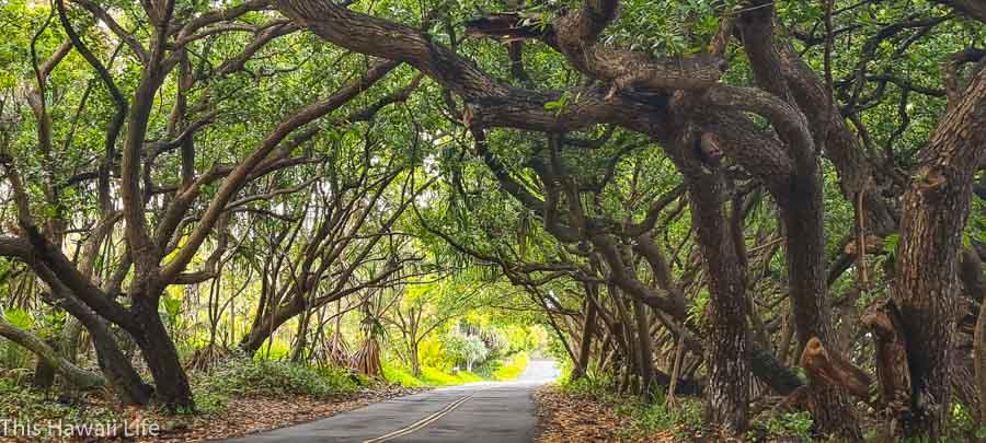 Kalapana Pohoiki Road 13