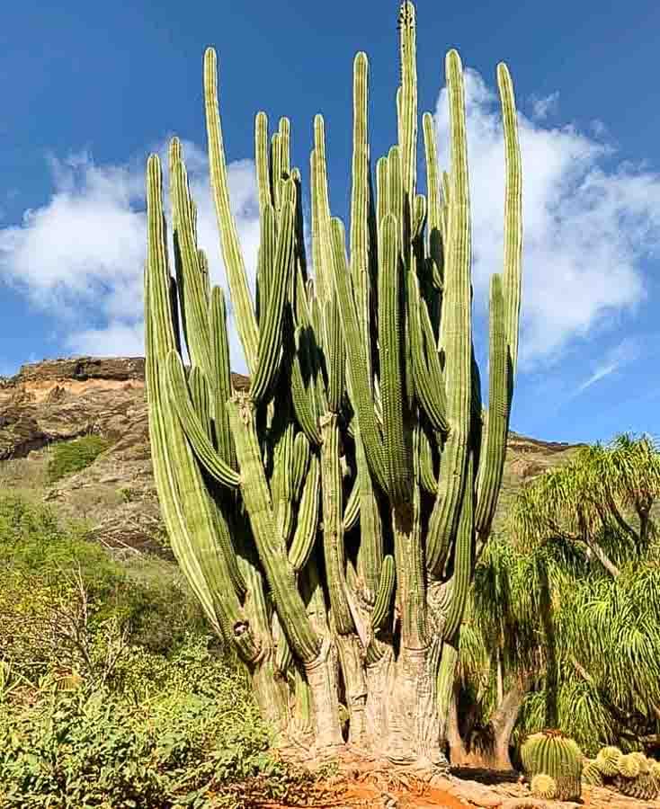 Koko Crater Botanical Garden cactus collection