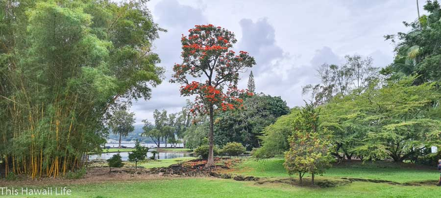 Things to see a close to Lili'uokalani gardens