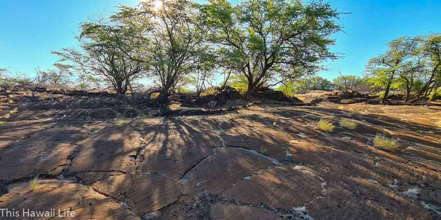 Where to find petroglyphs in Hawaii