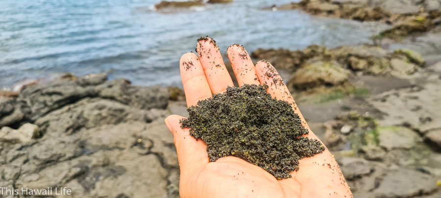 beach sand at Richardson's an interesting mix of Green Olivine sand crystals