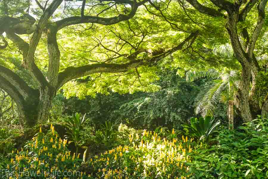 Why visit a botanical garden in Oahu