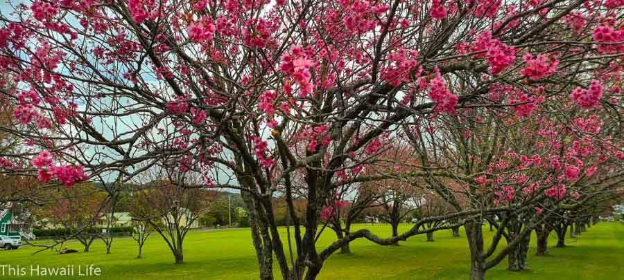 Places to explore around Waimea and the Hamakua coast