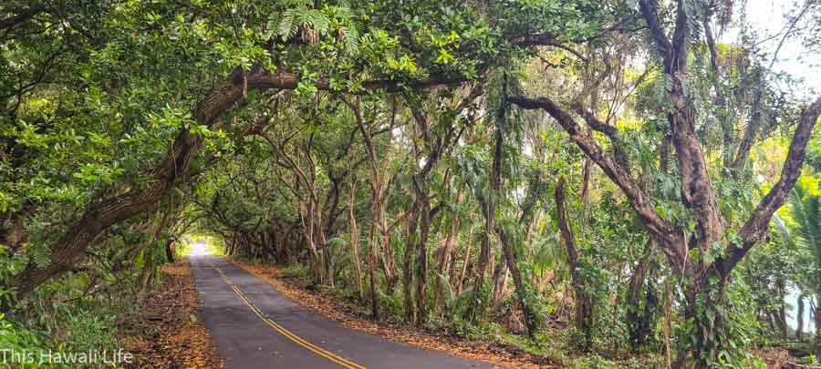 Drive the Scenic Red Road in the Puna District of Hawaii