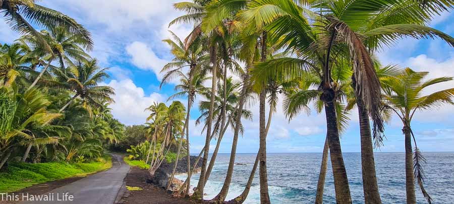 Best scenic drives of the Big Island to experience on the island