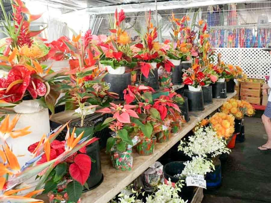Kona Farmers markets to visit around Kona and surrounding areas