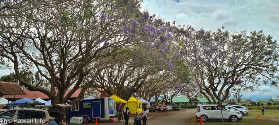 Shop Waimea farmers markets for fresh produce, delicious foods, arts and crafts & other specialty goods