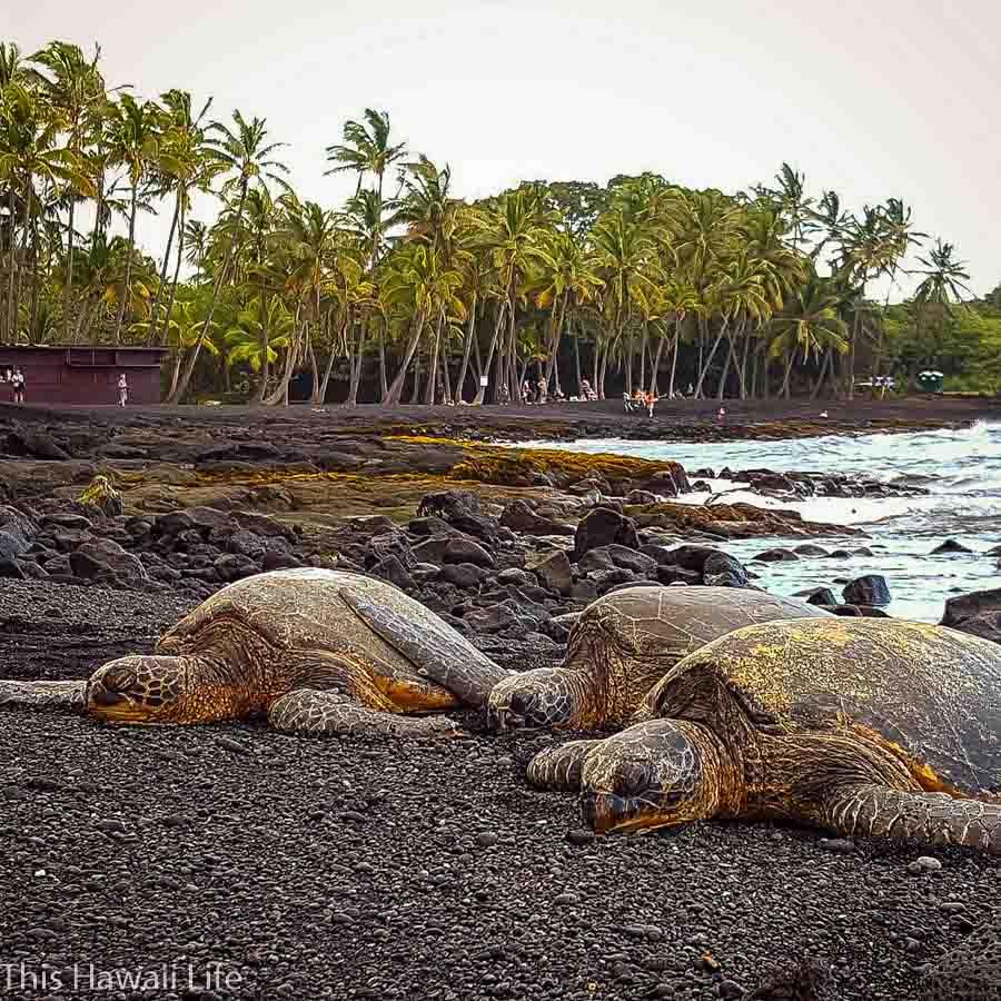 Punalu'u Black Sand Beach on the Big Island of Hawaii