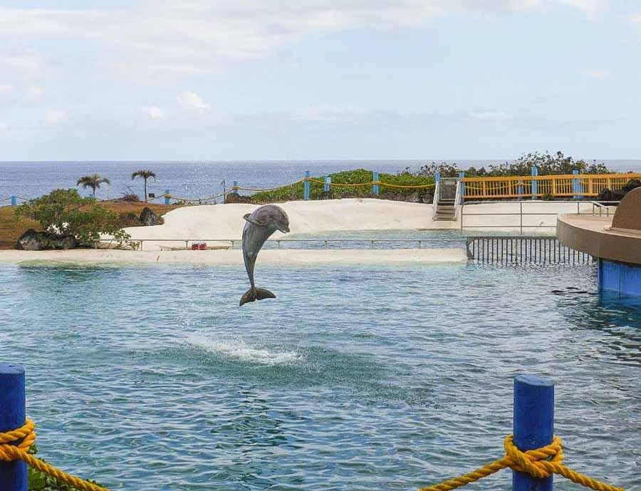 Visit the Sea Life Park