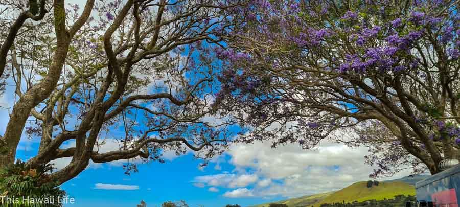 Weather in Waimea